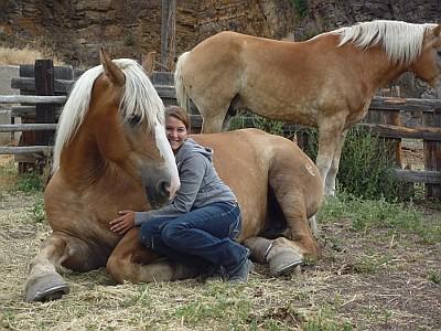 Martina und Pferde