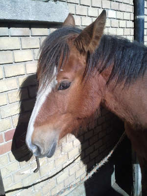 Pferd Kama